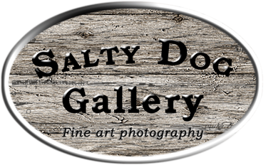 Salty Dog Gallery