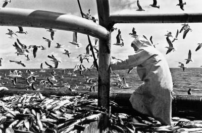 Birds, Fish, Man