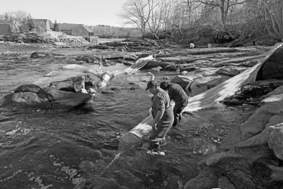 Elver Fishery - Checking Fyke Nets