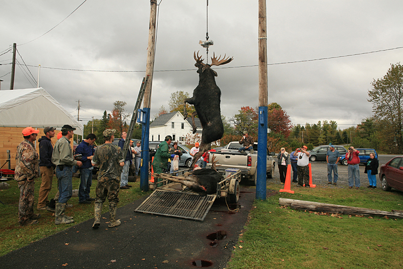 Moose lottery weighing