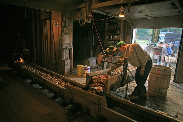 Sorting Potatoes c 2009