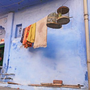 Bundi Parrots and Man