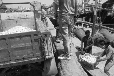 Unloading Fish - Porbander